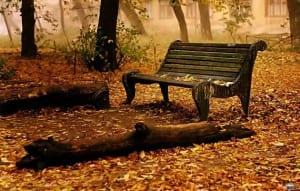 banco sobre hojas secas