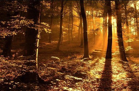 Paisaje de bosque en otoño