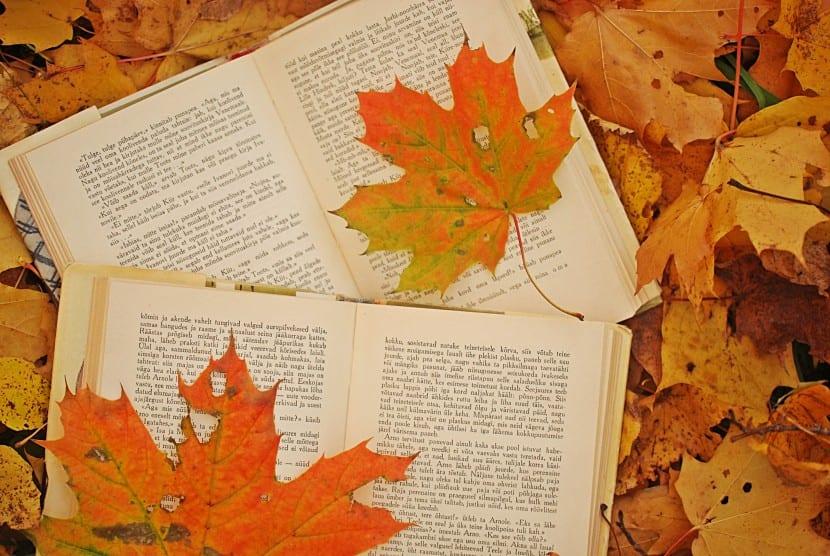 Hojas dentro de libros