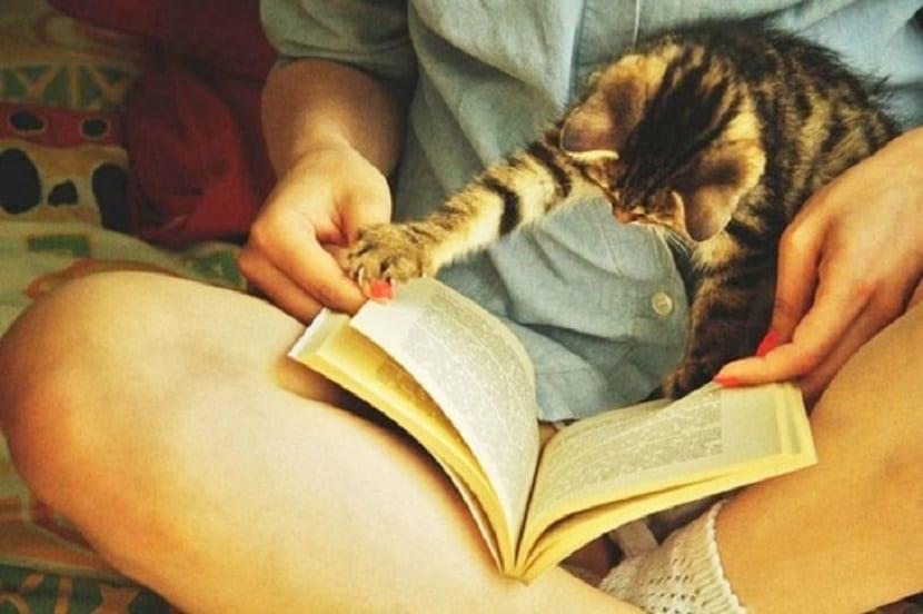 Detalles literarios que no deben faltar en un buen libro