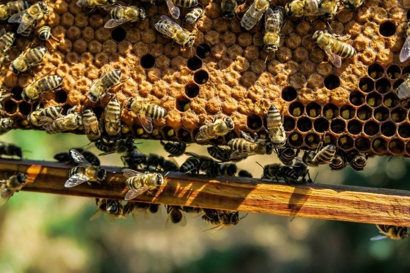 Nuevo misterio para Brunetti:¿Qué mata las abejas en Venecia?